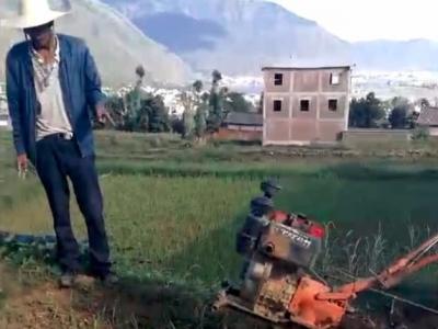 为防洱海污染大理铲拔大蒜 农户:买了蒜种才宣传禁种