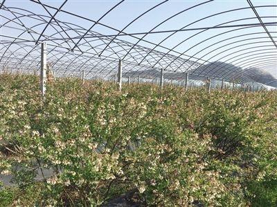 新一批省级示范家庭农场发布,丹阳四家农场入围