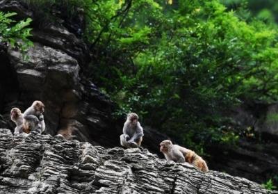 悟空,你又调皮了!句容境内发现野化猕猴种群