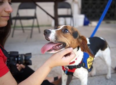 武汉物管新规:犬只出户不戴嘴套罚千元 物业怠职罚3万
