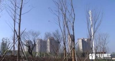 """丹阳首座大型""""雨水花园""""年底将正式启用"""