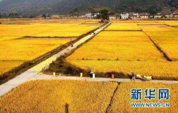 江苏规模化推进轮作休耕 每亩补助300元左右