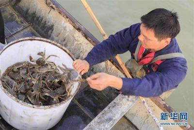 苏州整治大闸蟹电商市场秩序,约谈京东、阿里、苏宁和拼多多