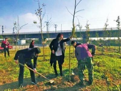 男子擅砍高速路行道树 被追究刑责并补种150株银杏