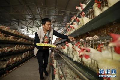 扬州江都区发生H5N6亚型禽流感疫情 已扑杀家禽31329羽
