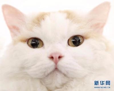 苏州一女子因不满新发型回家打伤猫,向理发店索赔猫的治疗费