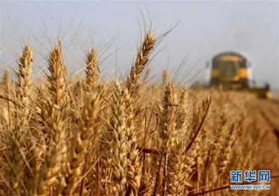 """补贴比卖粮收益多 让土地""""带薪休假""""受农户青睐"""