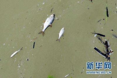 福建泉州海域发生碳九泄漏 当地渔民损失严重