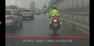 狗狗误入高架桥 交警一路护送:这也是一条生命