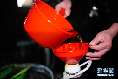 古法茶油开榨
