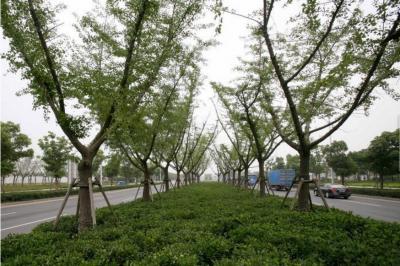 宋官营小区绿化改造征求居民意见