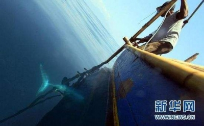 日本退出国际捕鲸委员会 日媒:此举将受国际指责