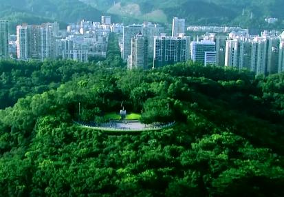 两棵高山榕 续写春天的故事