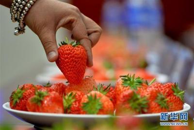 太阳光照少 草莓上市迟 价格还是一如既往的高
