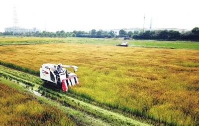 全市农业农村工作暨农村人居环境整治工作推进会召开