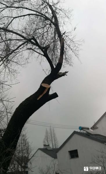 """一棵树引发邻里纠纷 执行法官出面化解多年""""恩怨"""""""
