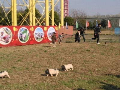 这个比赛真有趣 小猪在跑人在追