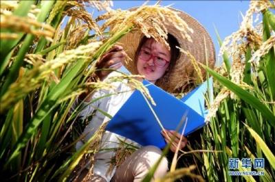 中国科学家克隆出杂交稻种子 袁隆平:望早日应用生产