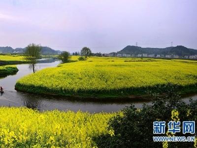"""众多学者在江苏大学研讨""""主要经济作物分子设计育种"""""""