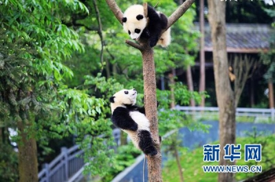 我国首部《大熊猫志》在川出版面世