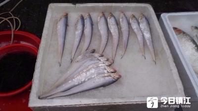 """专项捕捞许可证停发""""江刀""""要说""""再见""""? 镇江市场上刀鱼已上市价格不稳定"""