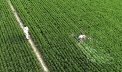 重磅!中办国办印发《关于促进小农户和现代农业发展有机衔接的意见》(全文)