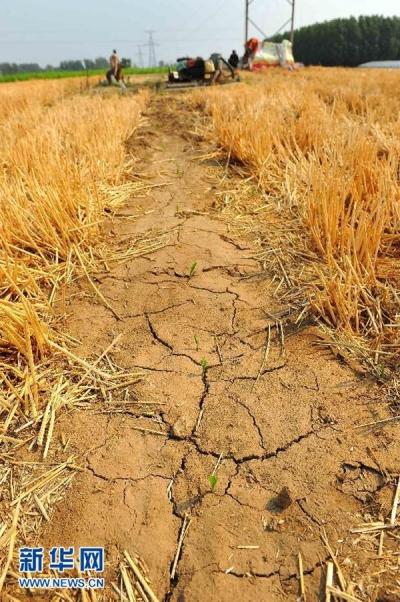 """水稻有记性?研究发现水稻对干旱有""""记忆"""""""