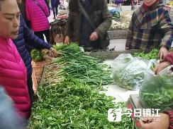 时令野菜大量上市价格低 老年人更偏爱踏青挑野菜