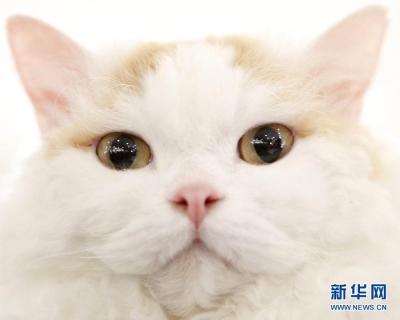 猫尿会发光?BBC:关于猫咪,你可能不知道的16个事实