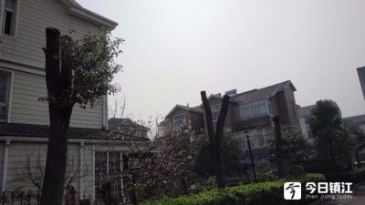 """驸马山庄一期一百多棵树被剃""""秃头"""" 丹徒区城管局:会找物业行政约谈"""
