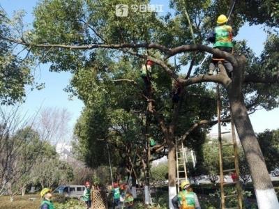 修剪树枝也能当状元  城市绿化养护举行技能大比武