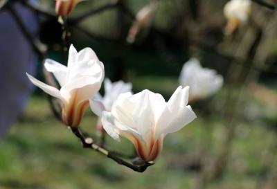 """暖春三月,踏青寻春不须远 """"鲜""""美十足,待您品味"""