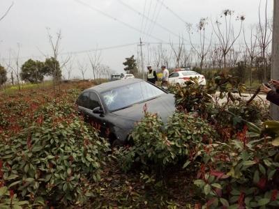车速过快避让不当   奥迪车冲入树丛中
