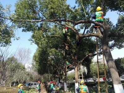 合作伙伴, 麻烦上一下,谢谢)修剪树枝也能当状元  城市绿化养护技能大比武