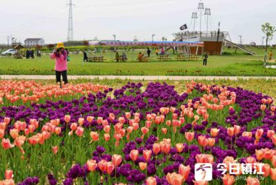 后白郁金香旅游文化节17日盛大开幕
