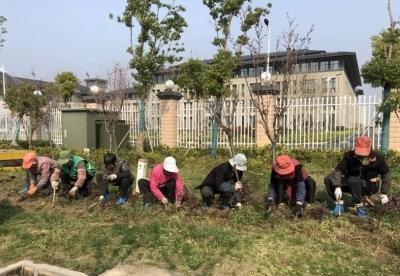 丹阳百余名园林工人奔赴城区主干道补栽、换栽