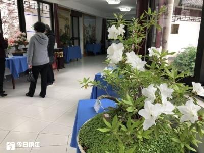 第20届南山杜鹃花节开幕  6万多株杜鹃竞相绽放迎客来