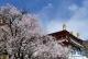 山寺桃花始盛开