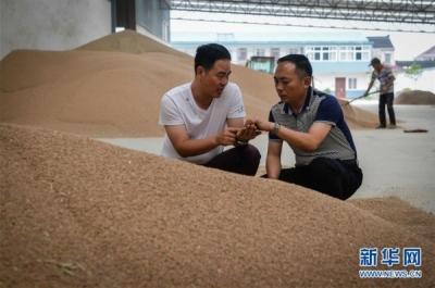 江苏防控小麦赤霉病进入关键期:立足预防,主动出击!
