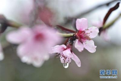 出门带把伞!未来三天江苏全省多雷阵雨天气