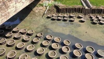 镇江丹徒一小区景观河为何变成臭水河?居民质疑整治效果不佳
