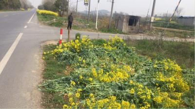 丹徒路政:清理边坡种植 营造良好环境