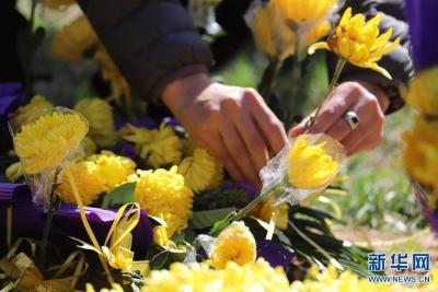 江苏首例晶石葬落地苏州 积极推广生态葬 守护绿水青山