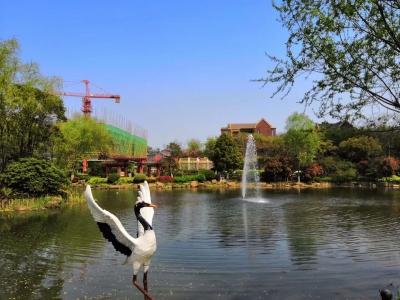 春风直上 乐跑镇江-----2019红豆·西津府首届春季健康公益行正式启动