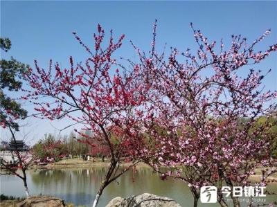【网络中国节】一年冷节是清明 镇江人是怎么过清明的