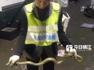 大惊失色!丹阳一车间惊现1米多长大蛇