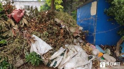 绿化率太高也烦恼,修剪树枝成垃圾  街道:立即清理并寻求两全之法