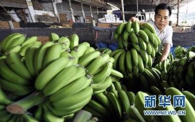 中柬启动香蕉贸易 首批100吨抵沪