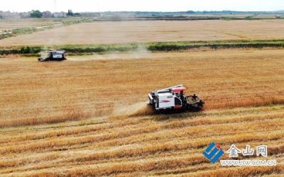 小麦品质不错 期待价高收购