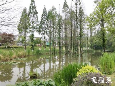 """江苏省林木种苗和林下经济产业锚定""""千亿级"""" 绿树生金"""